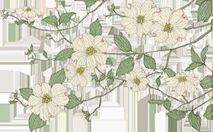 BWF-Dogwood-Flowers