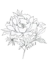 beeswingfarm-peony-flower-illustration