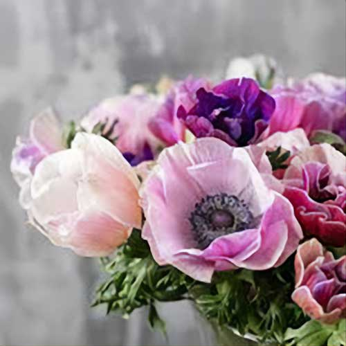Loudoun County Flower CSA Subscription Anemone Flower Bouquet